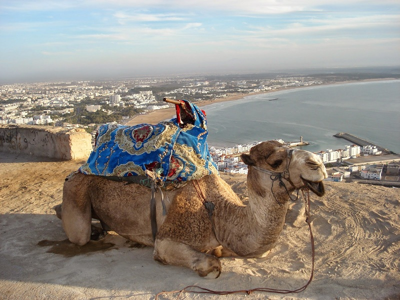 Shore excursions from agadir, day trip from agadir paradise